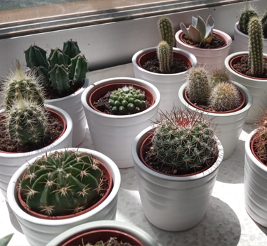 CACTUS - cactus pequeños variados